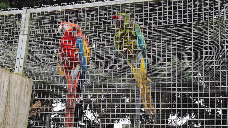 Lincolnshire Wildlife Park Parrots