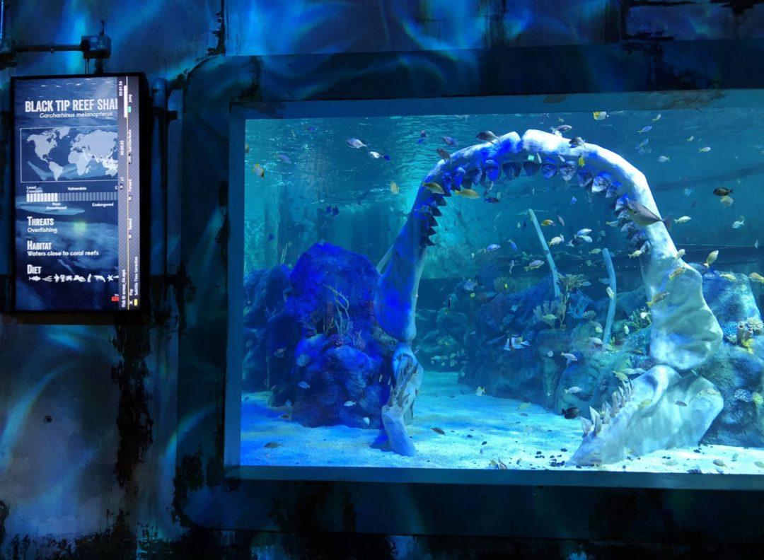 ear Grylls Adventure Birmingham Dive Jaws