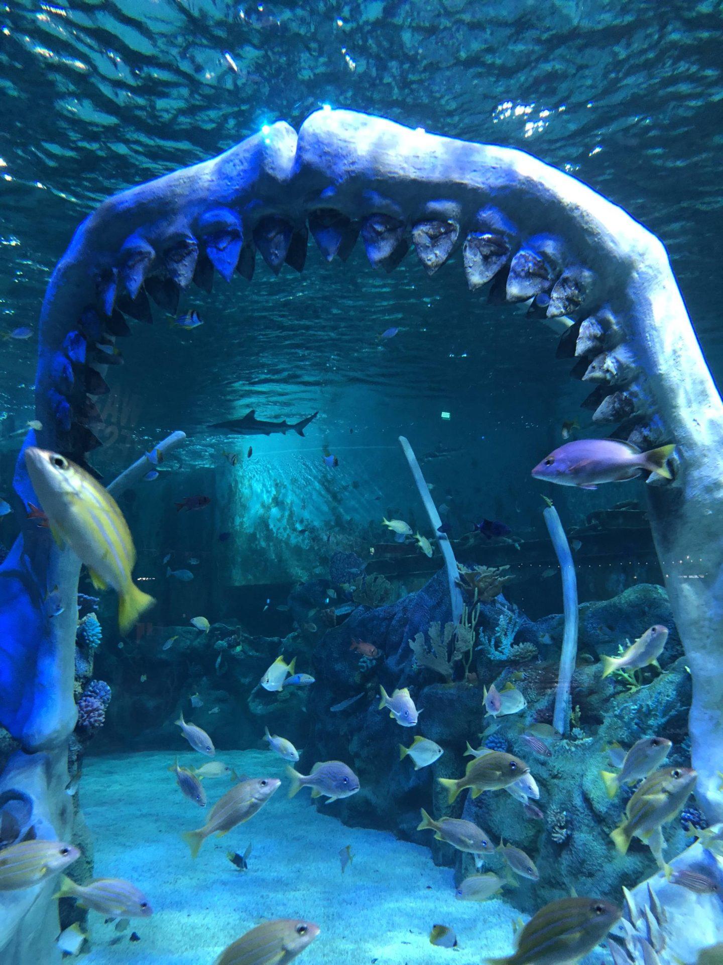Bear Grylls Adventure Birmingham Dive Jaws