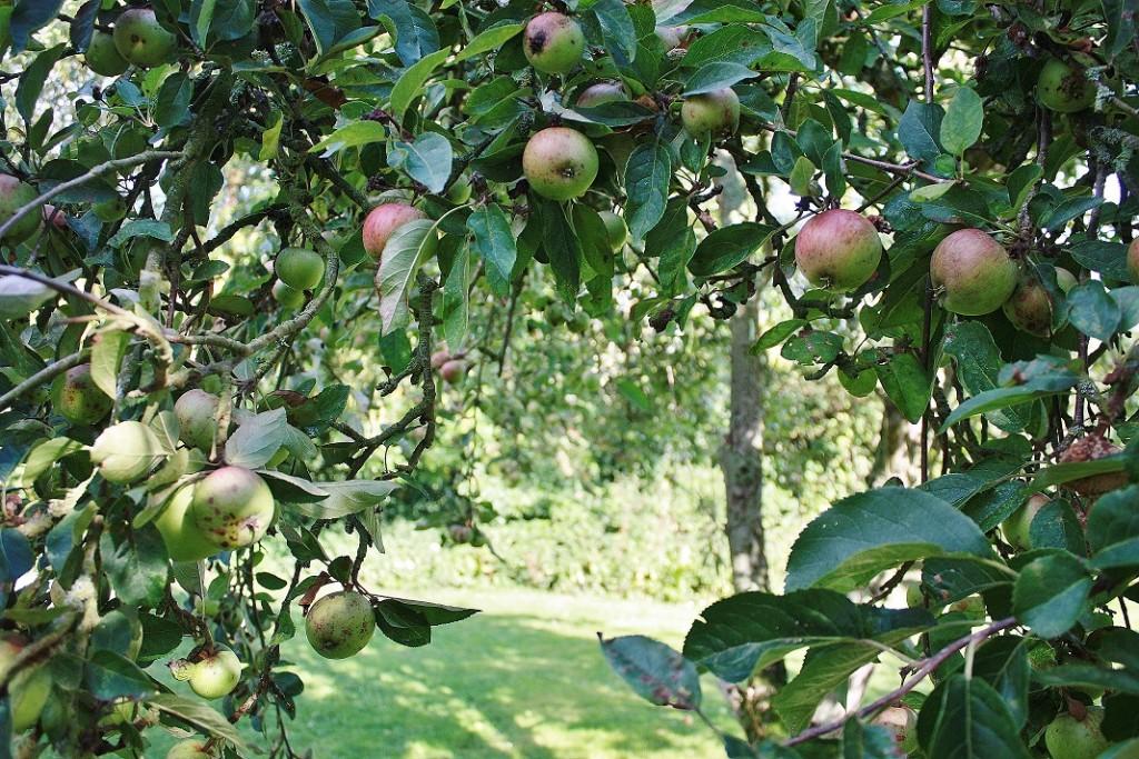 Appletreewheel