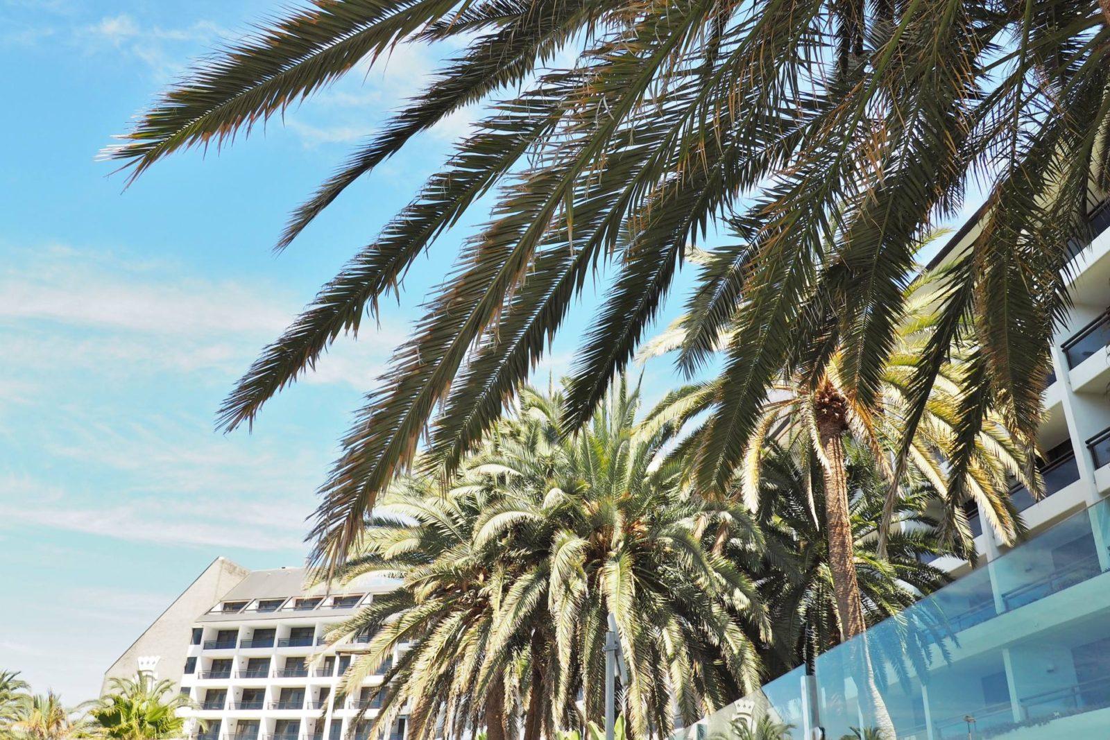 Gran Canarian Palm Trees