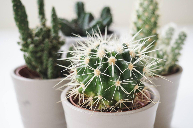 Emma Victoria Stokes Cactus Chill IE
