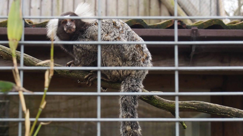 Lincolnshire Wildlife Park Monkeys